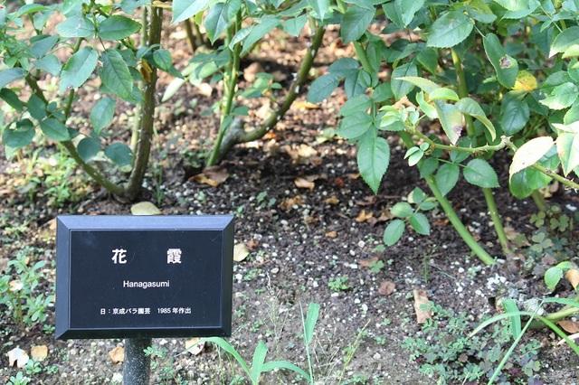 20171008-002-IMG_3272花霞.jpg