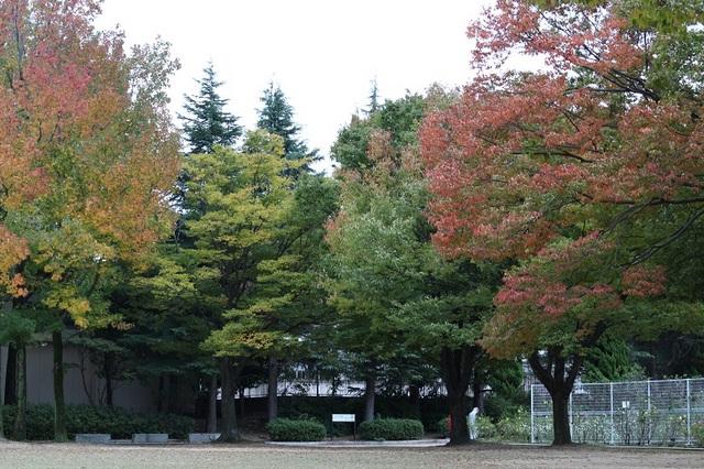 20171101-001-IMG_4597バラ園内紅葉.jpg